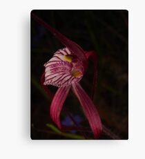 wild blood red orchid Canvas Print