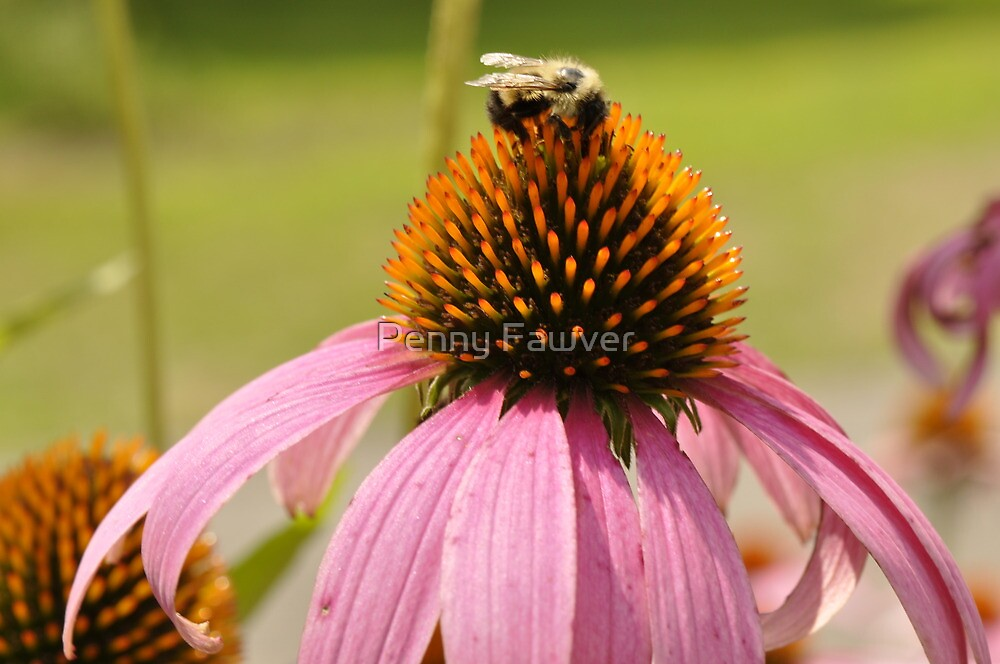 sweet nectar by Penny Rinker