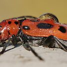 bugs and insects by Penny Rinker
