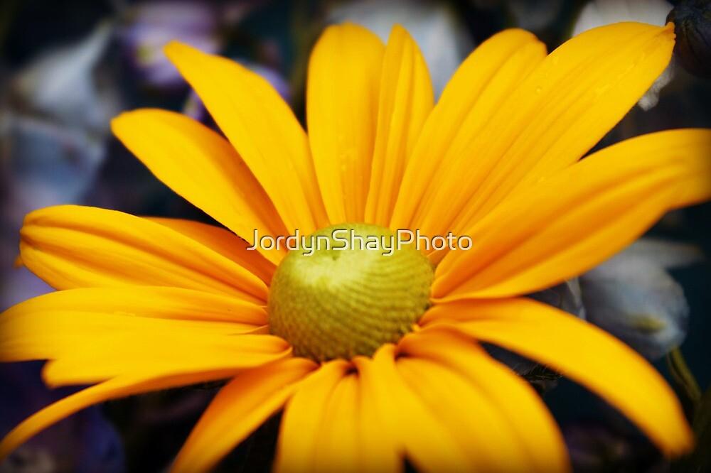 Yellow Daisy  by JordynShayPhoto