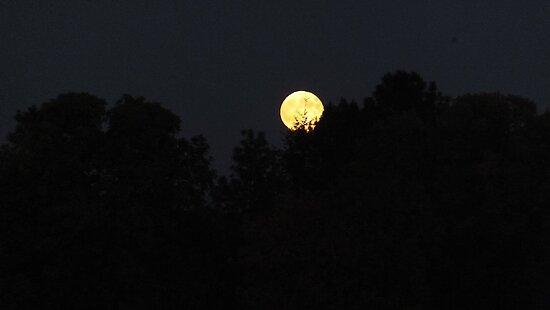 Moon Riseing by SKNickel