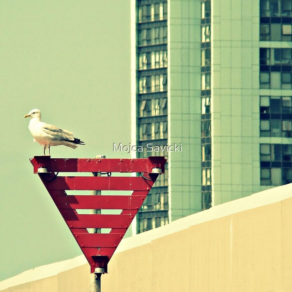 Looking West by Mojca Savicki