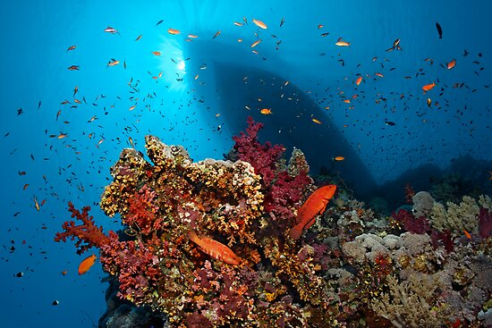 Divers Heaven by Norbert Probst