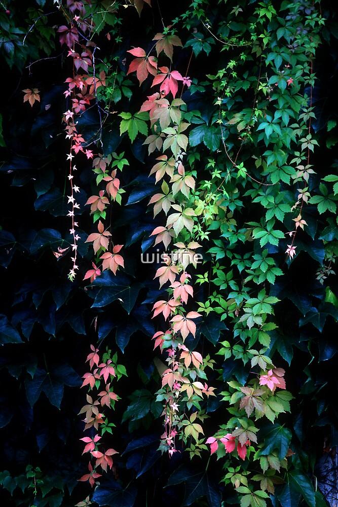 Untitled by wistine