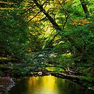Autumn reflections in the stream by Debra Fedchin