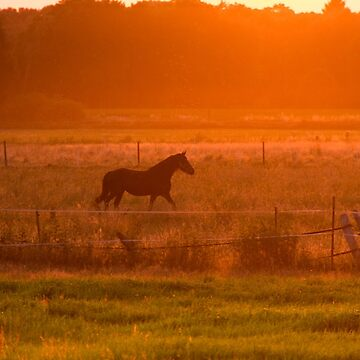 Sunny Horse by Laracoa