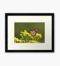 Autumn Monarch 2 Framed Print