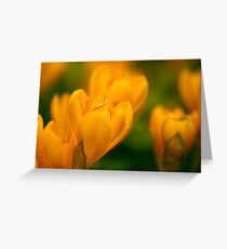 Yellow Crocuses With Rain Drops Greeting Card
