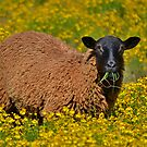 Gazing In A Field Of Wildflowers by Kathy Baccari