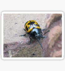 Beetle Bug Sticker