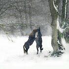 Snow fight by Alan Mattison