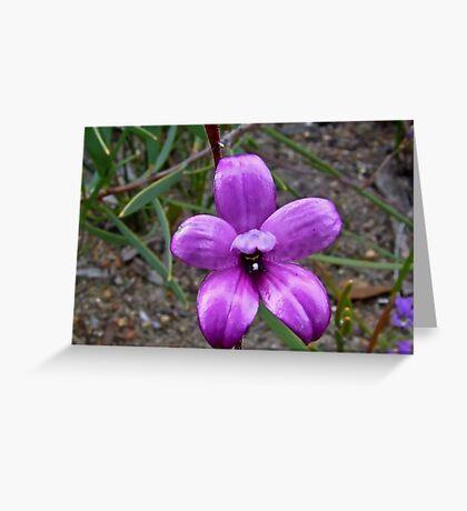 Enamel Orchid Greeting Card