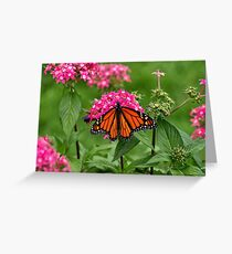 Bright & Beautiful Butterfly. (Monarch) Greeting Card