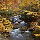 fall in the smoky mountains by dc witmer
