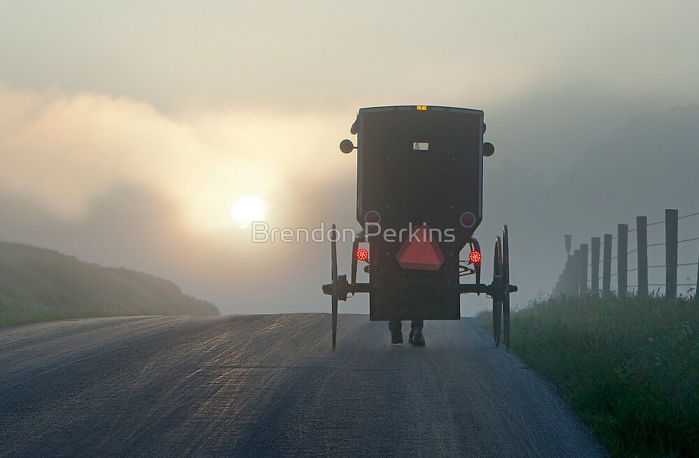 Into the Morning Mist by Brendon Perkins