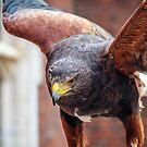Eagle 1 by MarceloPaz