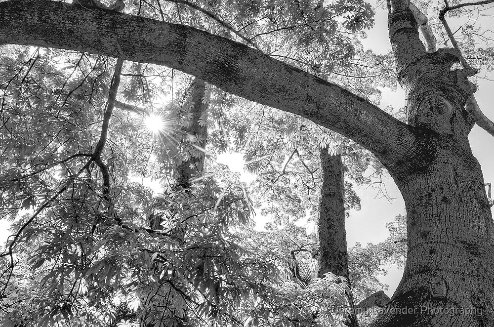 Playing with the light under a Cotton tree in Nassau, The Bahamas by Jeremy Lavender Photography