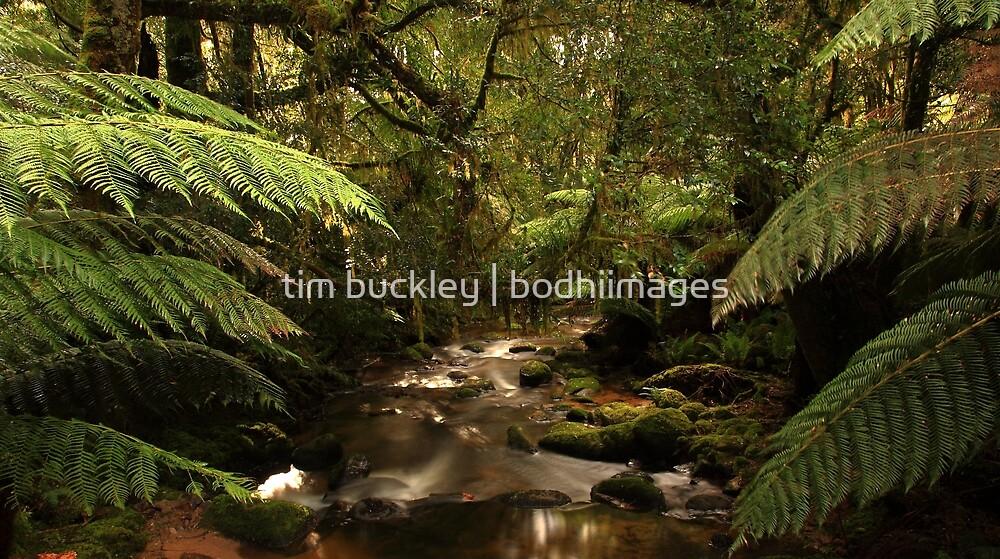 rivulet, st columba falls, northeast tasmania, australia by tim buckley   bodhiimages