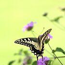 flitter flutter fly   by keki