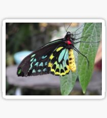 Colorful Butterfly on Leaf  Sticker