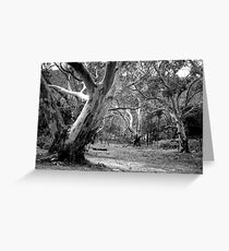 River Red Gums. Greeting Card