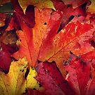 Autumn Colours by Chris Goodwin