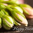 Sunlit Buds - Birthday Card by Ellesscee