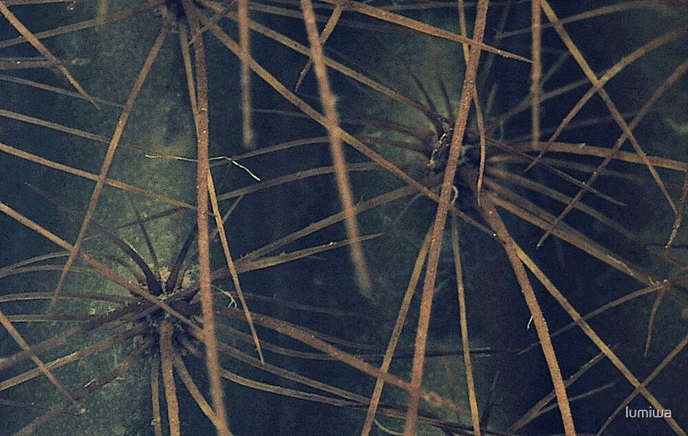 Cactus by lumiwa