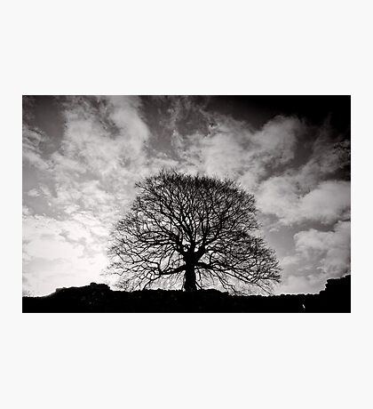 Tree of Triumph - landscape- Kenilworth - Great Britain Photographic Print