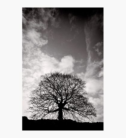 Tree of Triumph - portrait - Kenilworth - Great Britain Photographic Print