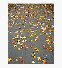 Fallen Stars, New York City  Photographic Print