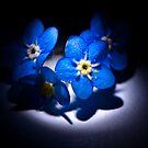 True Blue Centre Stage by Mick Kupresanin