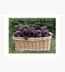 A basket of Chocolates! Art Print