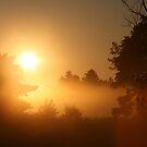 Misty Michigan Sunrise by Brenda Dow