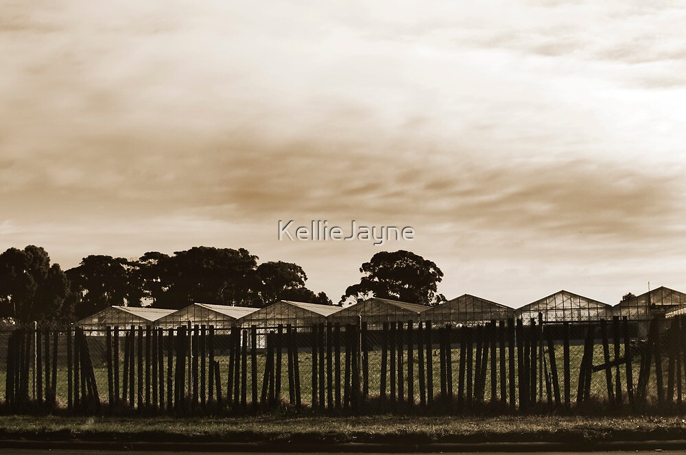 Dull and Brown by KellieJayne