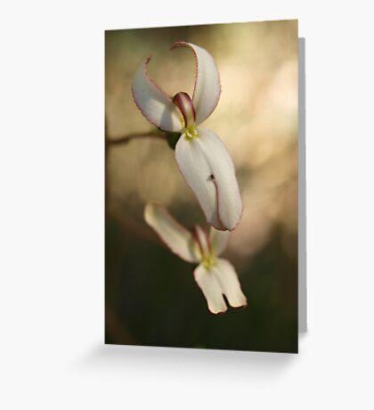 Stylidium schoenoides Greeting Card