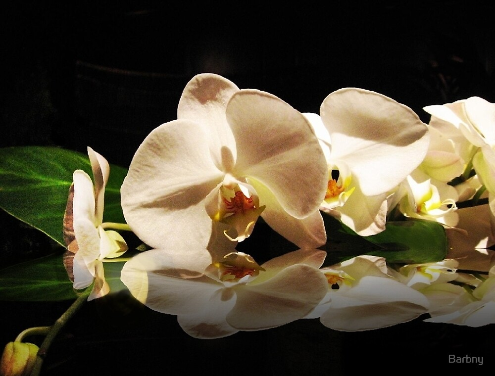 Delicate Orchids by Barbny