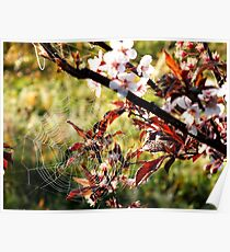 Orchard web Poster