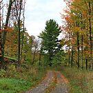 Autumn Beauty in Vermont by Deborah  Benoit
