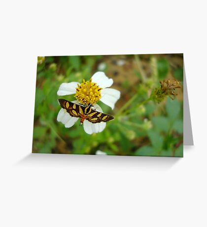 Syngamia florella:  A  DAY FLYING MICROMOTH Greeting Card