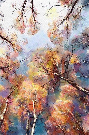 Birch by bogfl