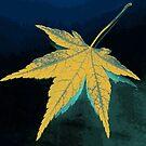 Autumn leaf fine art by Nhan Ngo