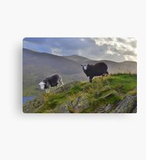 The Lake District: Life on the Edge Canvas Print