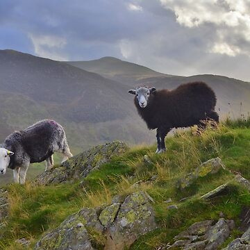 The Lake District: Life on the Edge by rob3003