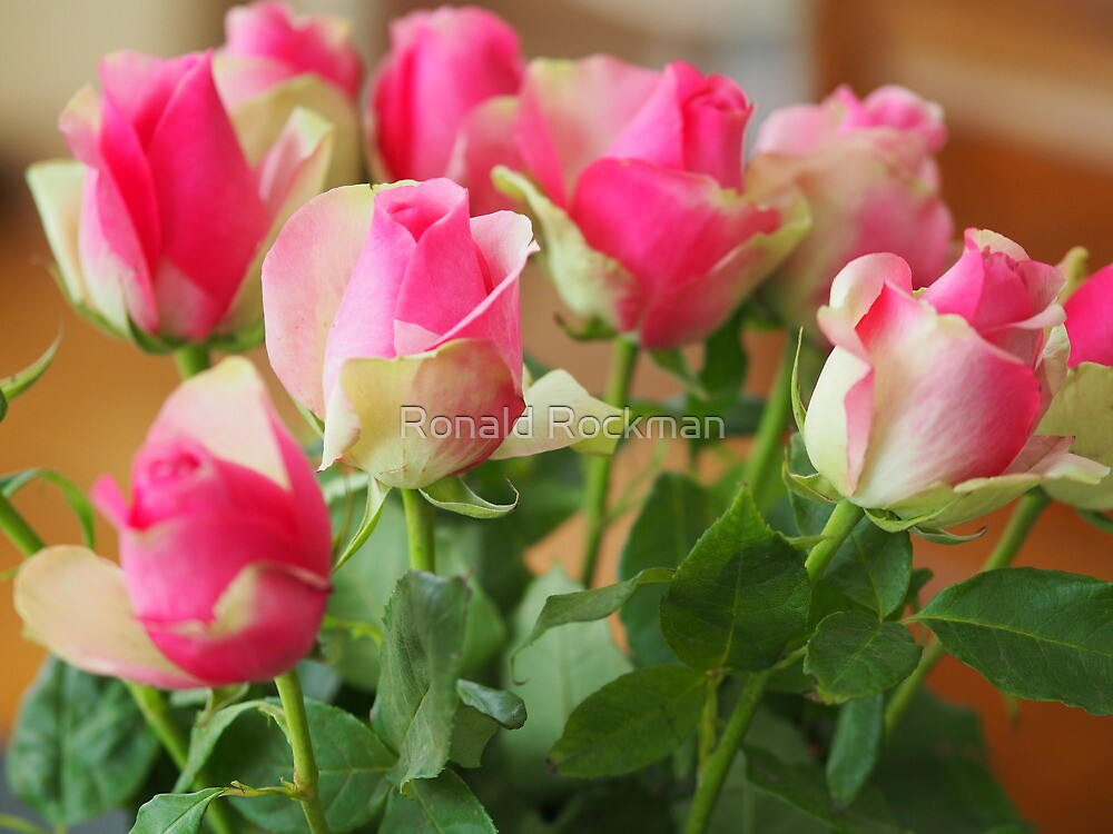 Roses For Pamela by Ronald Rockman