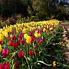Tulip Garden Bed by Eve Parry