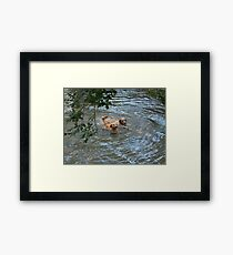 Is This The Stick You Threw? Framed Print