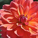 Last Flower Of Summer  by joan warburton