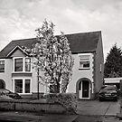 Pleasant Street - Kenilworth - Britain by Norman Repacholi