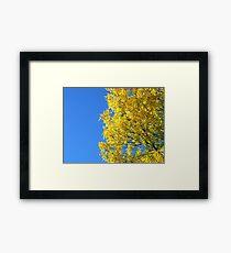 Treasure In a Deep Blue Sky Framed Print